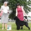 Best Puppy in Sweeps at Nutmeg Regional Specialty under breeder judge Julie Parker