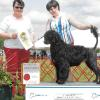 Best Puppy in Sweeps Mayflower Supported Entry